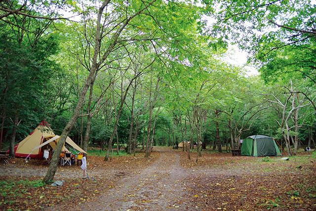 赤池 キャンプ 場