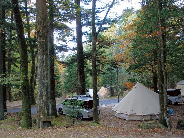 オート 白馬 場 森林 キャンプ