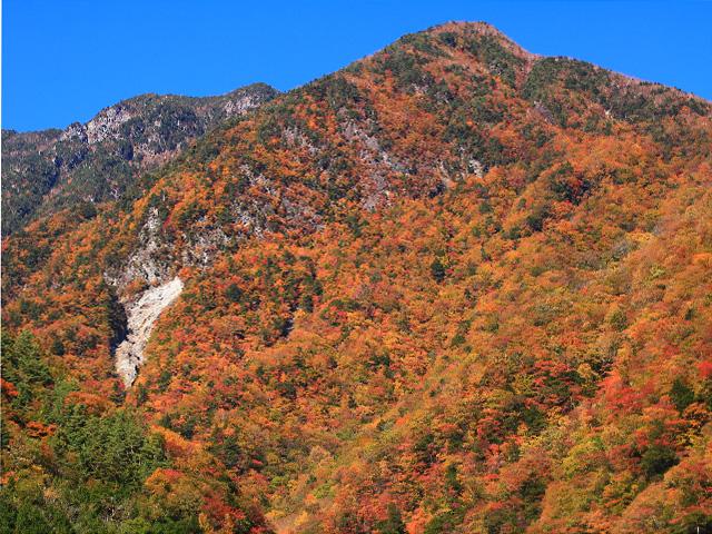 壮大な南アルプスの紅葉に出会う!静岡県オクシズ「林道東俣線」ハイキング - 観光旅行メディア まっぷるトラベルガイド