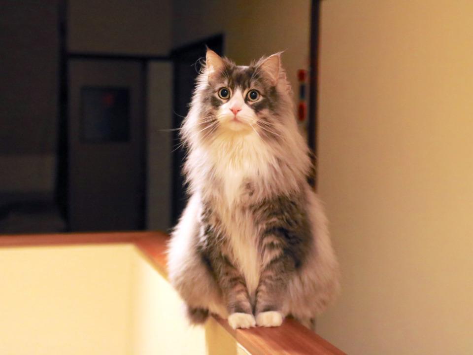 【岐阜・飛騨高山】看板猫ルークに会いに行こう!「ゲストハウスtau」1泊2日の高山旅 - 観光旅行メディア|まっぷるトラベルガイド