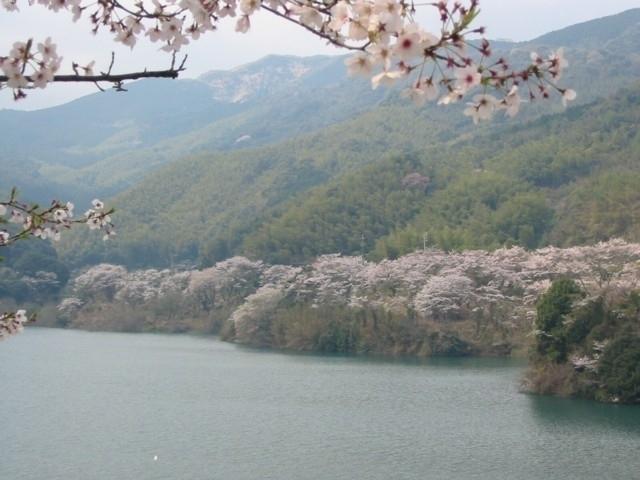 名所 福岡 桜