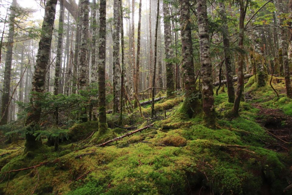【長野】白駒池周辺で「コケの回廊」ハイキング 雫が滴るもののけの森を歩く - まっぷるトラベルガイド